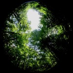 Fish-eye shot of forest canopy.